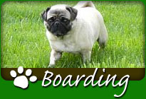 Boarding - Click Here
