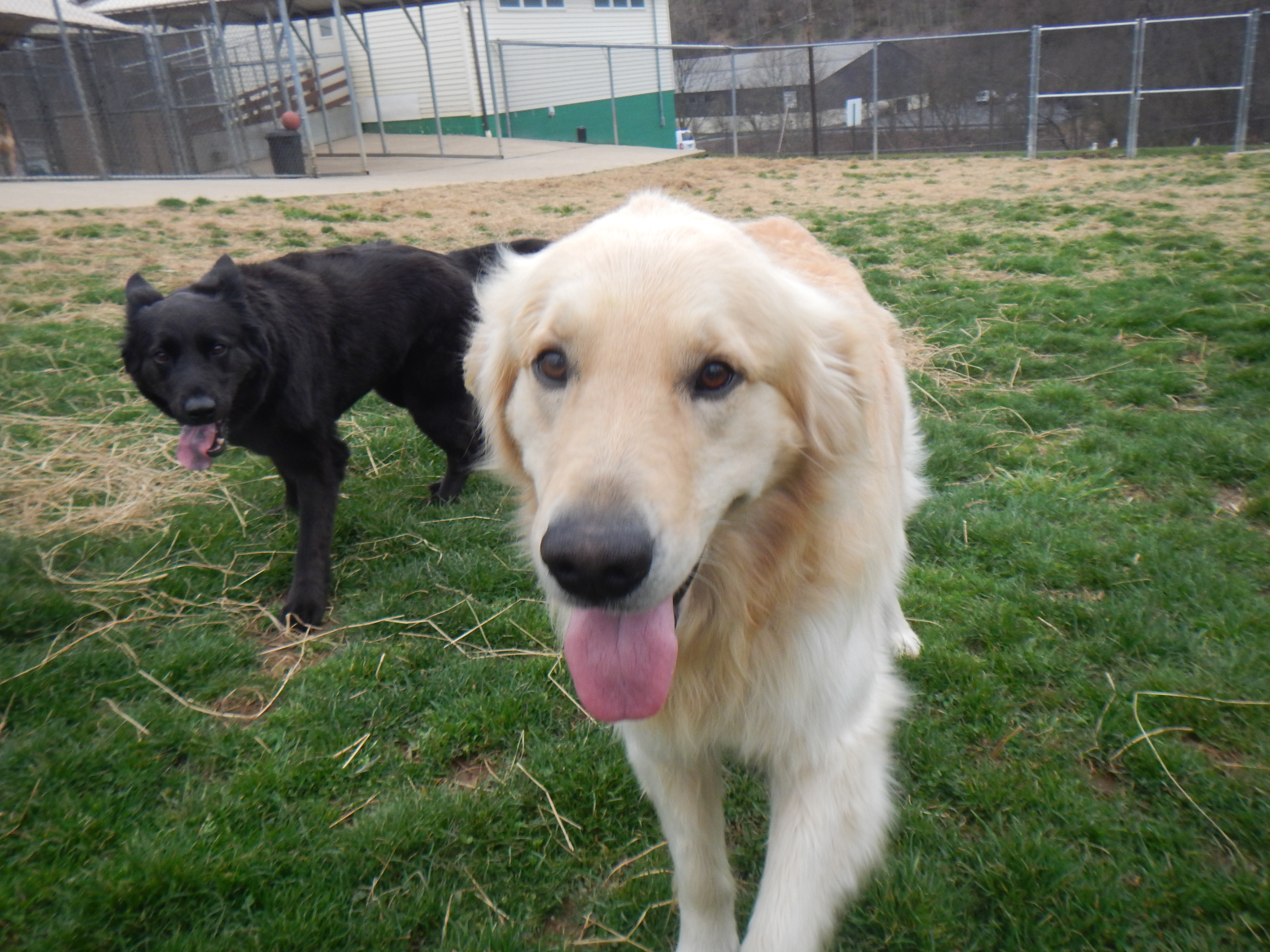 Free Day of Doggie Day Care at Airy Pines Dog Kennel ... - photo#39